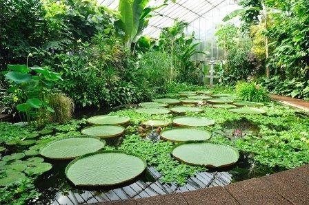 Ejemplares en el Real Jardín Botánico